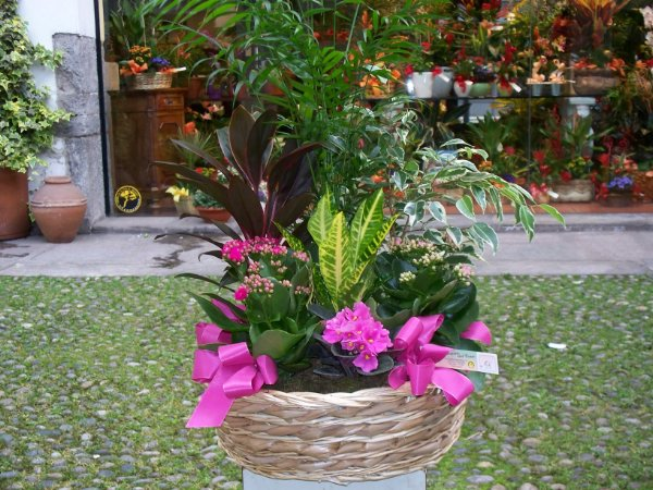 Composizione fioreria del corso fiori vigevano for Catalogo piante e fiori