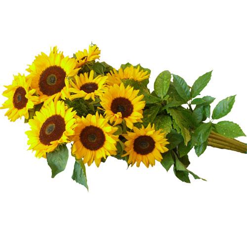 Mazzi di fiori a gambo lungo fioreria del corso fiori for Disegni e prezzi del mazzo